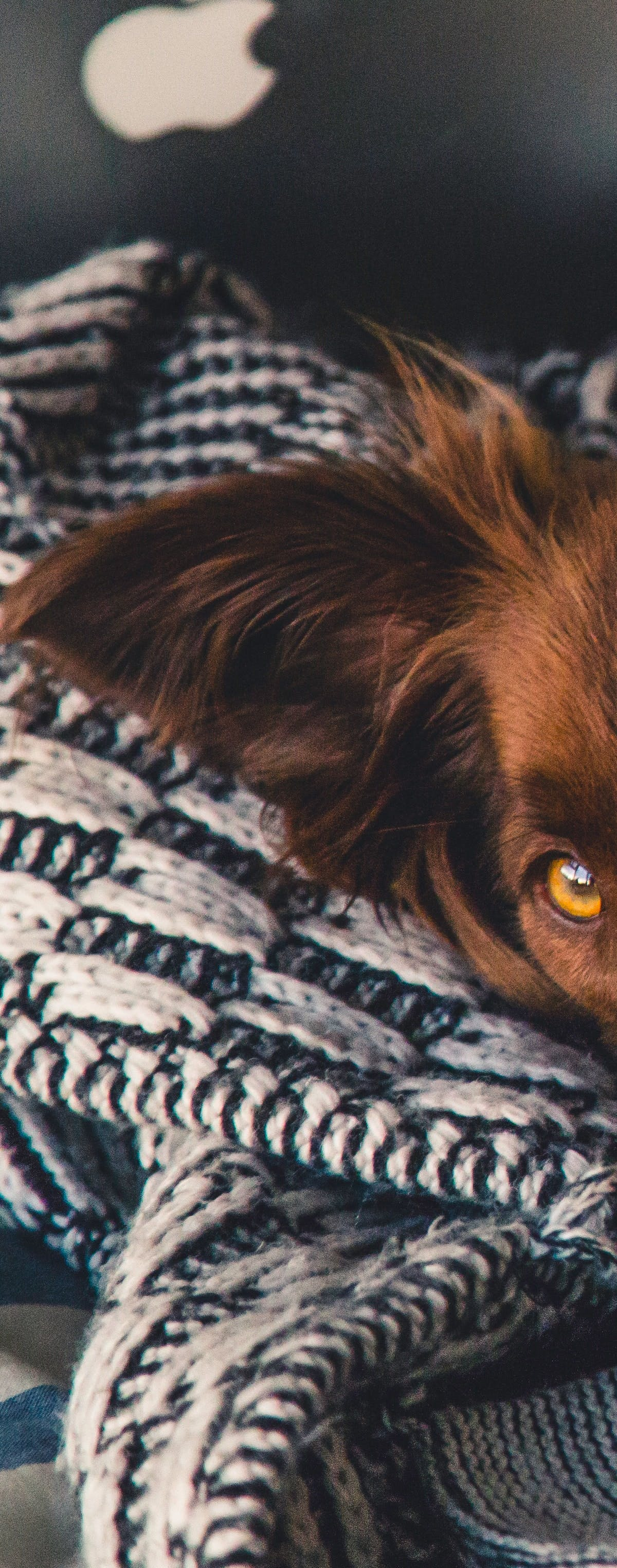 6 Things Every Pet Owner Should Have