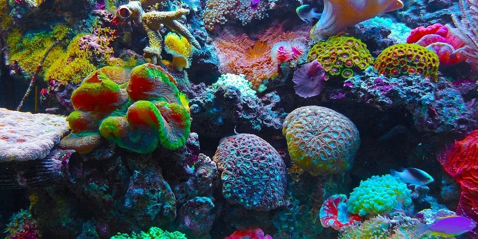 Hawaii Sunscreen Ban Aims to Stop Coral From Mysteriously Self-Destructing