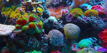 Coral ocean color reef colorful green pink blue red australia great barrier chasing coral