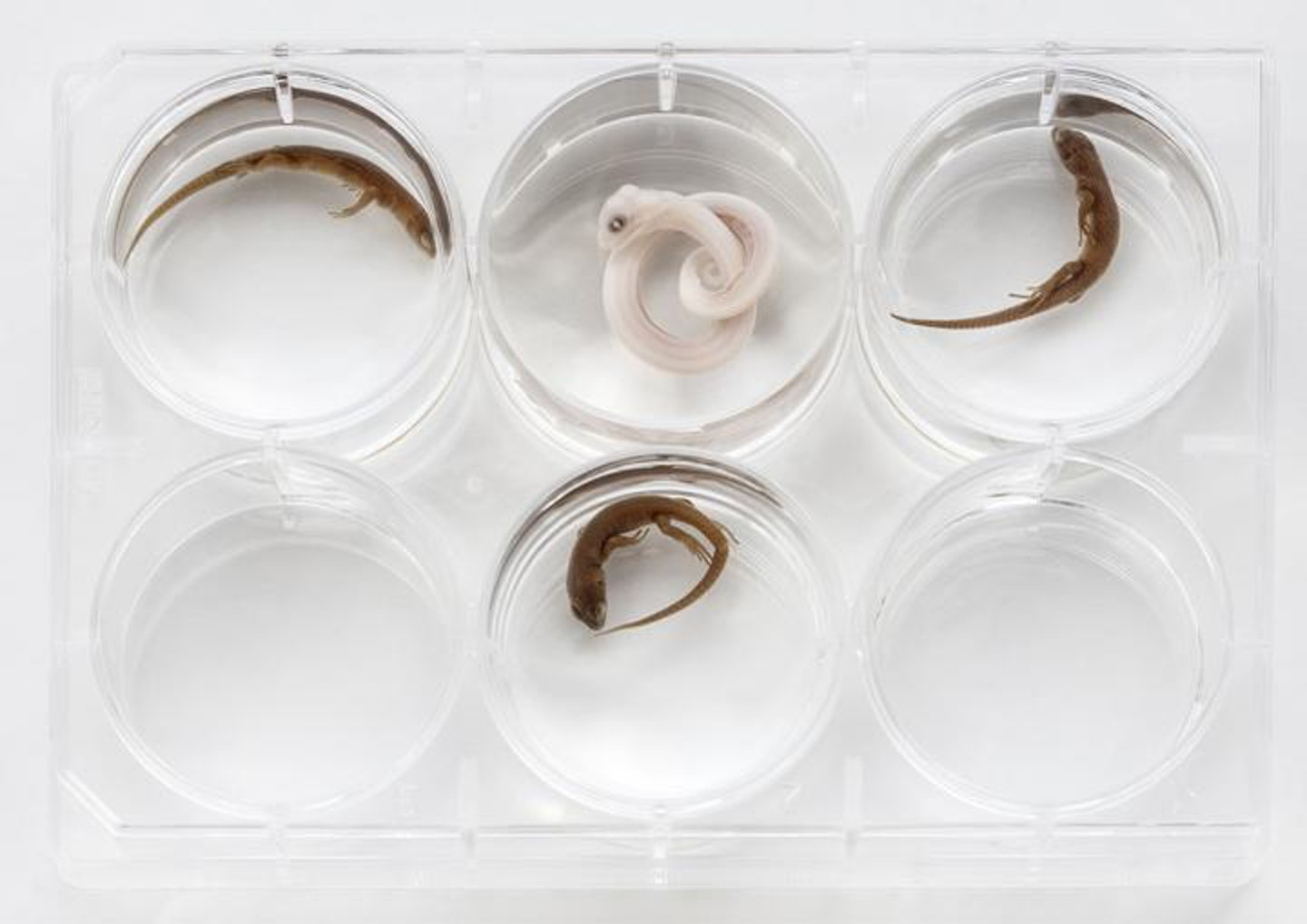 Snake Skulls Clarify How History's Creepiest Animals Lost Their Legs