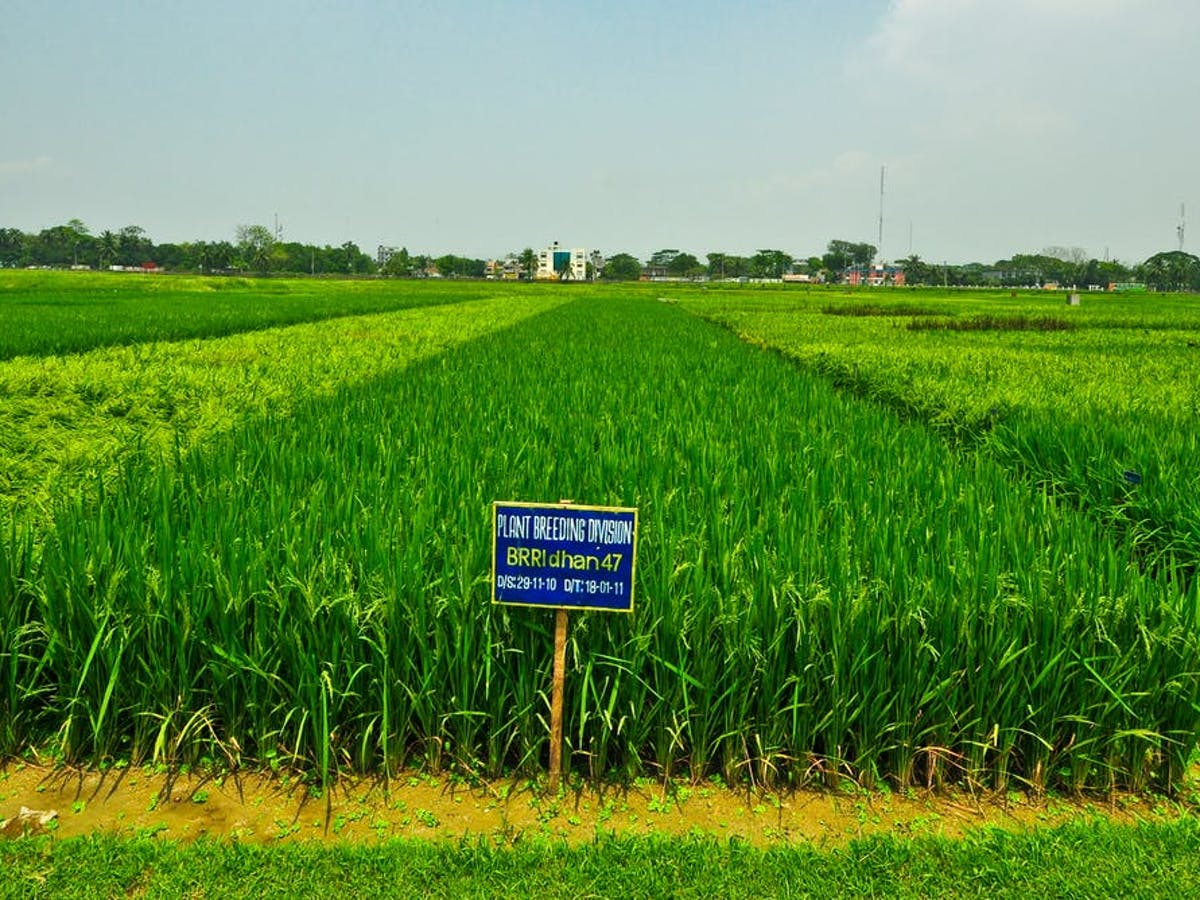 Saline Belt: Why Salt Is Destroying the Farming Industry