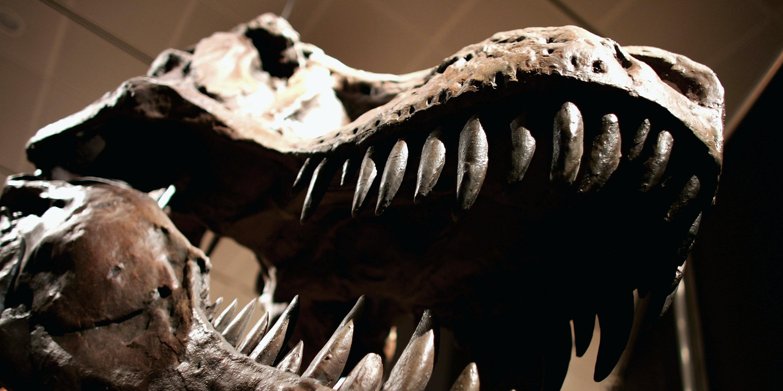 4 Weird True Crime Stories From the Dinosaur Fossil Black Market
