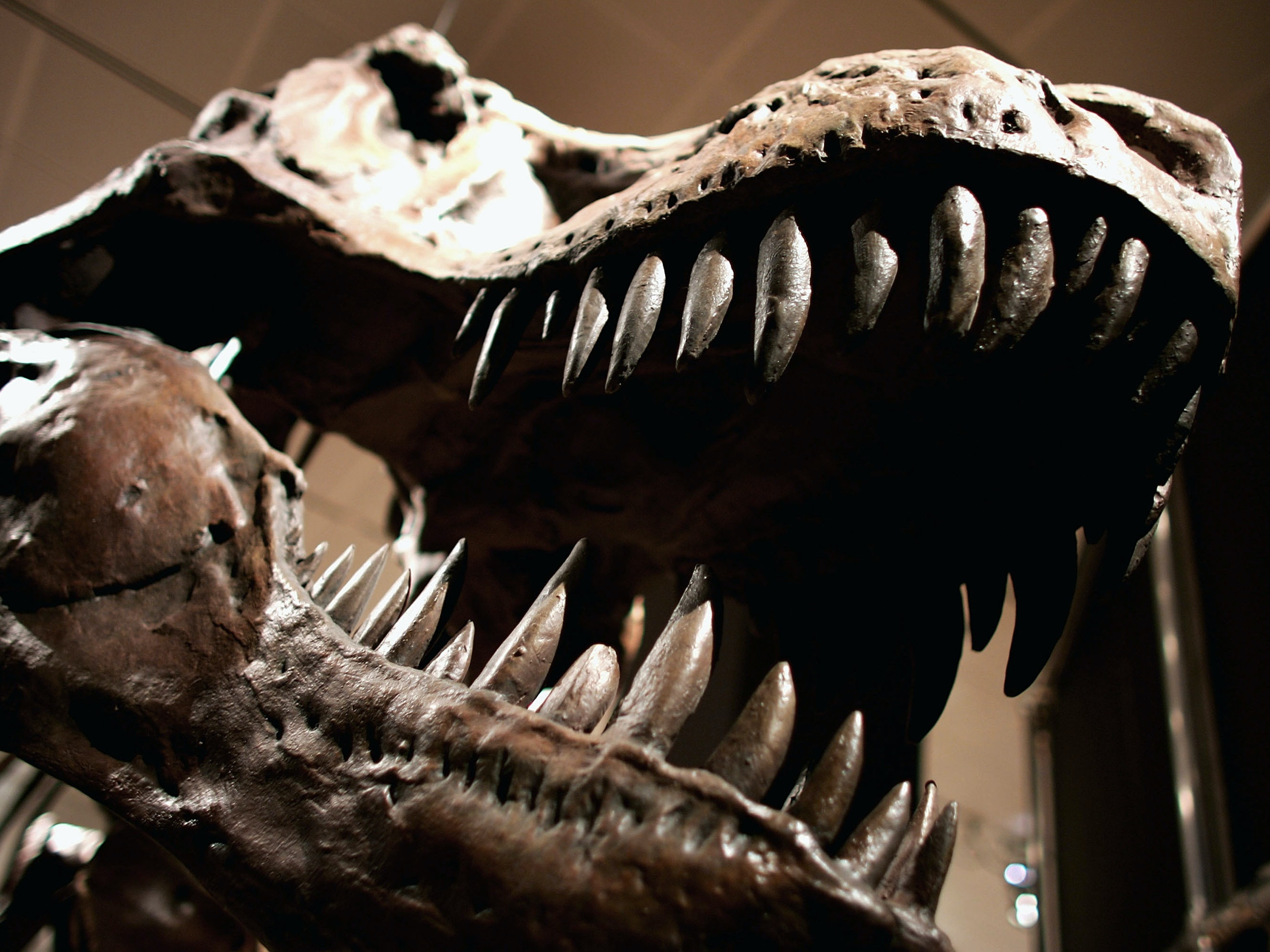 4 Weird True Crime Stories From the Dinosaur Fossil Black Market