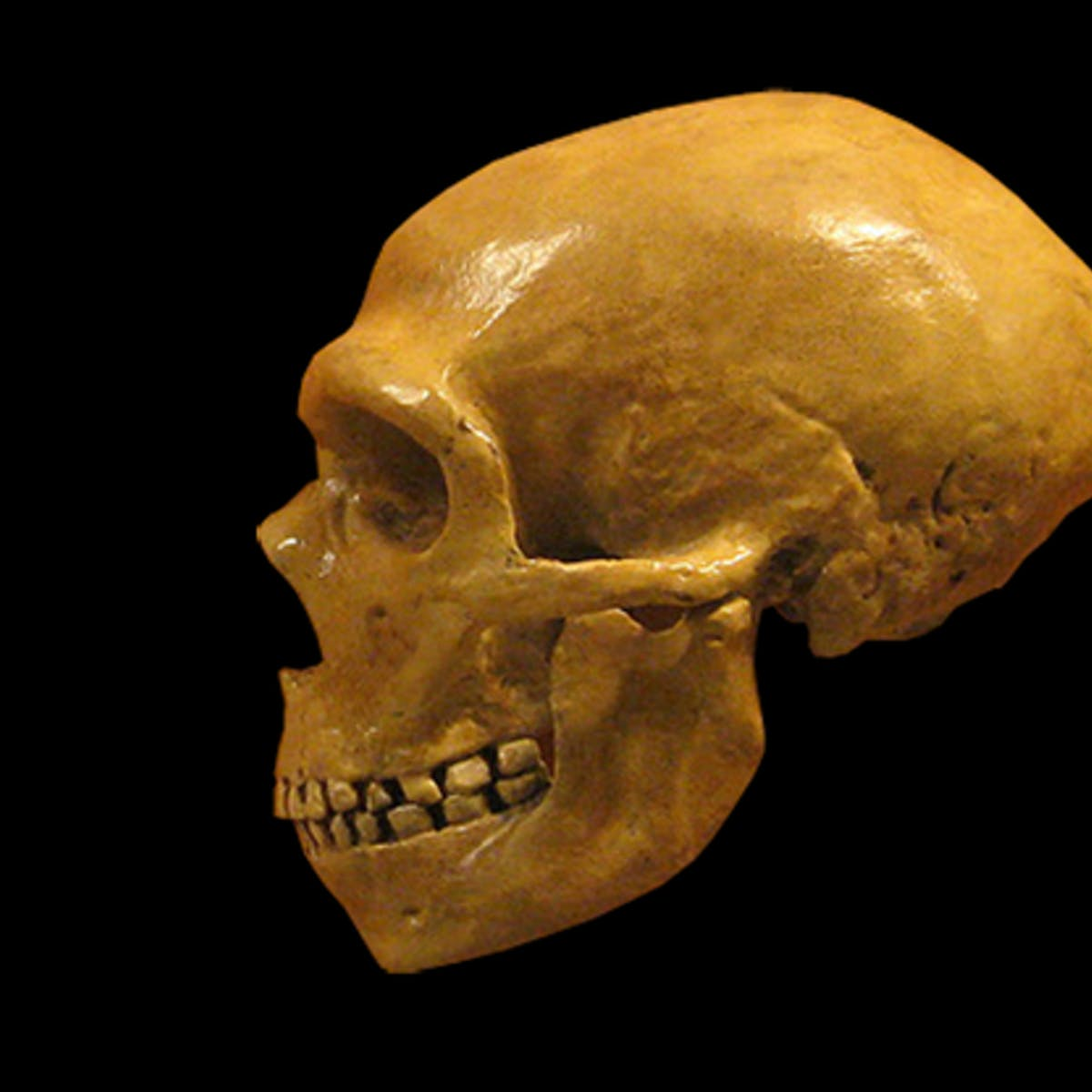 A common ear infection may have killed the Neanderthals
