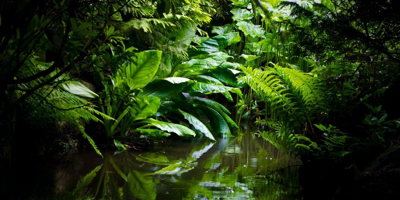 rainforest camu camu