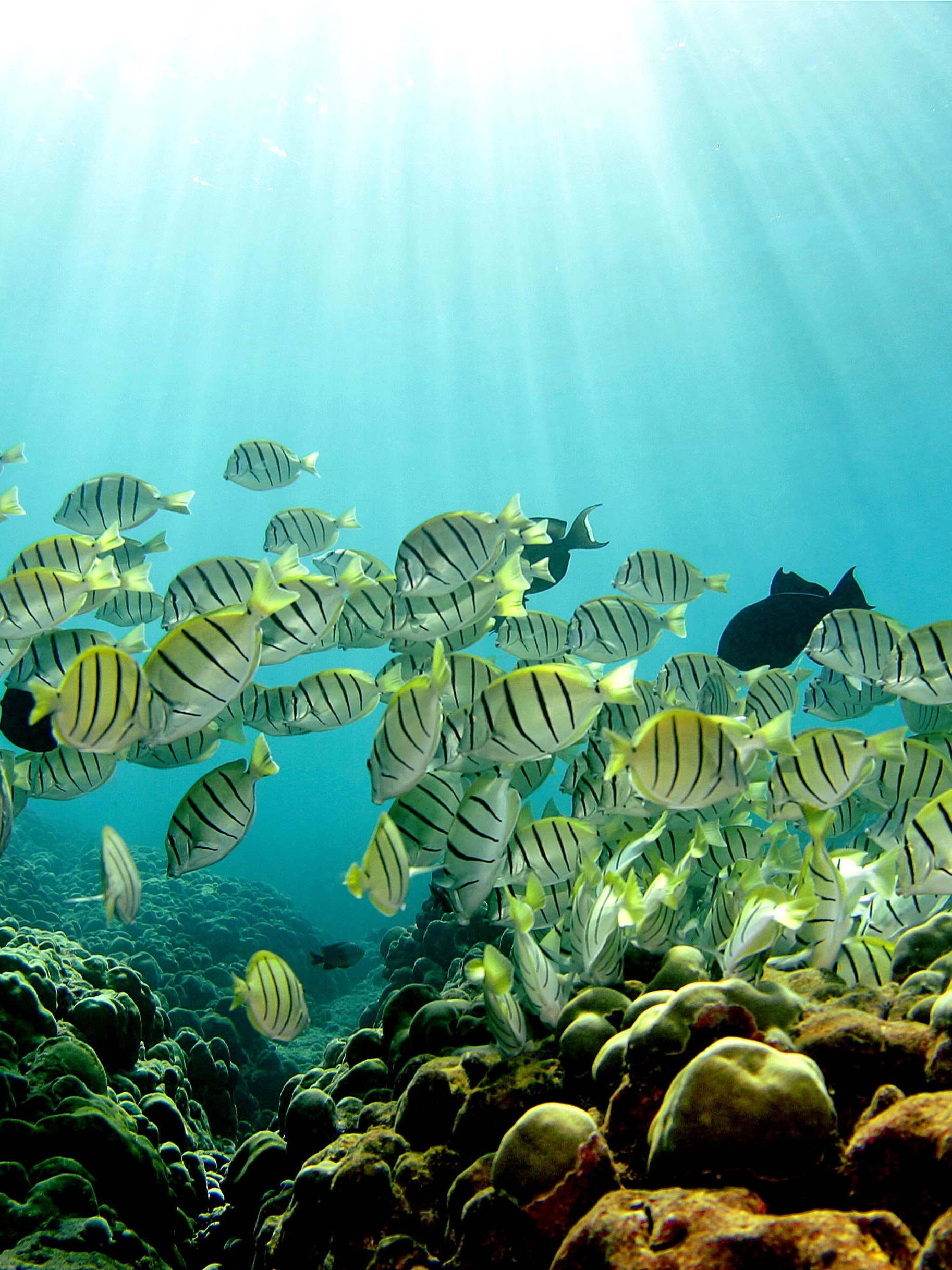a report on the issues of the decline in fish population in the ocean Start studying ap environmental science unit 7 exam review and often results in the bycatch of many ocean fish an environmental issue is known.