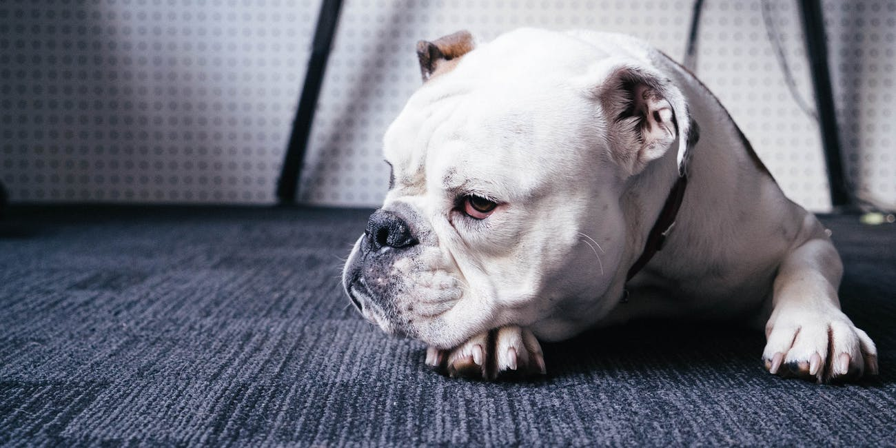 """New Strain of Virus That Affects Pets Is """"Great Reminder"""" to Vaccinate Dogs"""