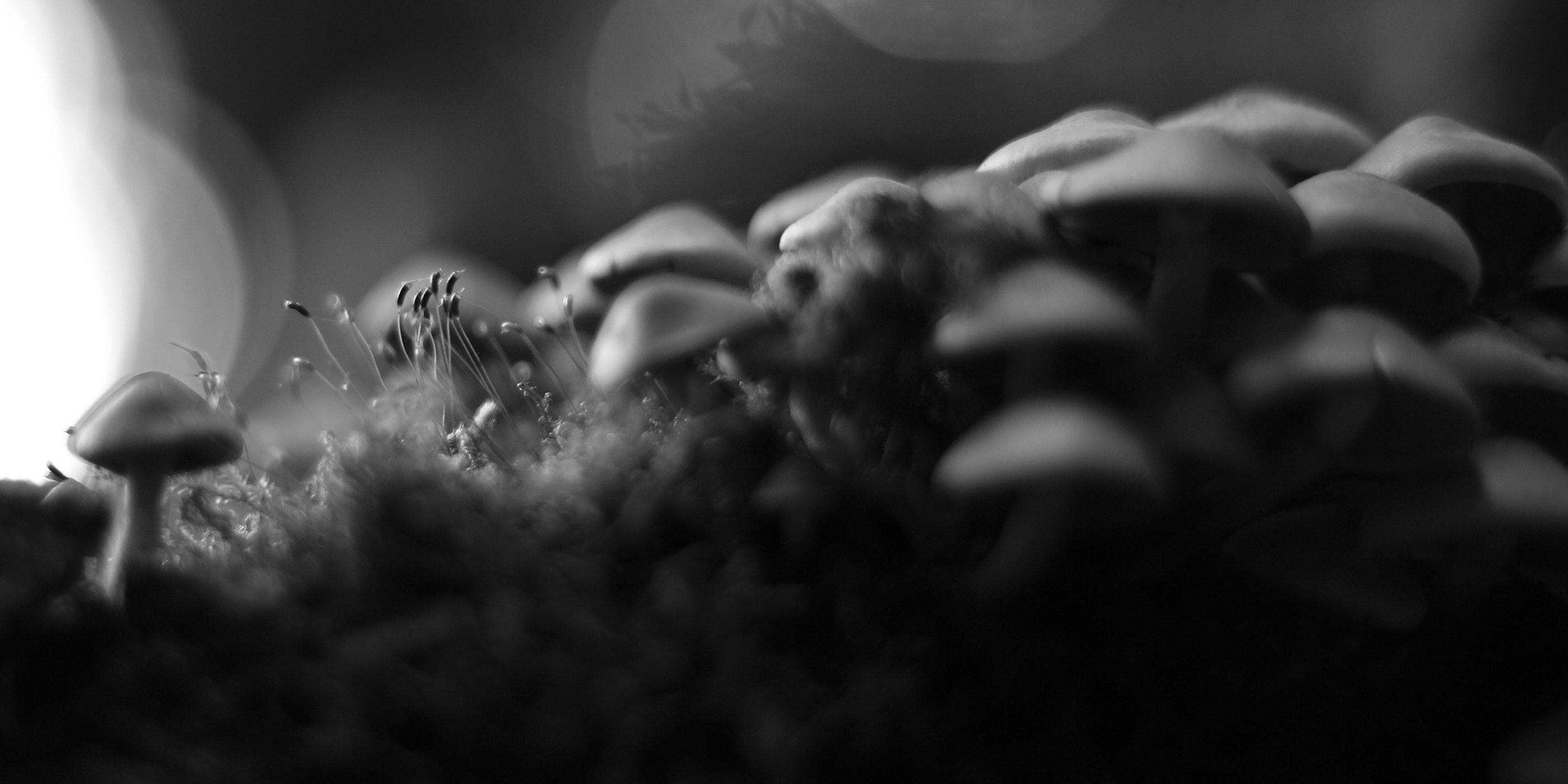Magic Mushrooms Put the Human Brain in Dream Mode and Facilitate Higher Thinking