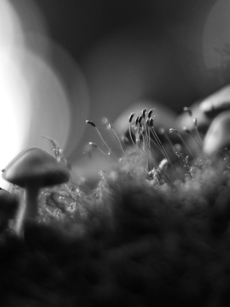 Magic Mushrooms Put the Brain in Dream Mode and Facilitate Higher