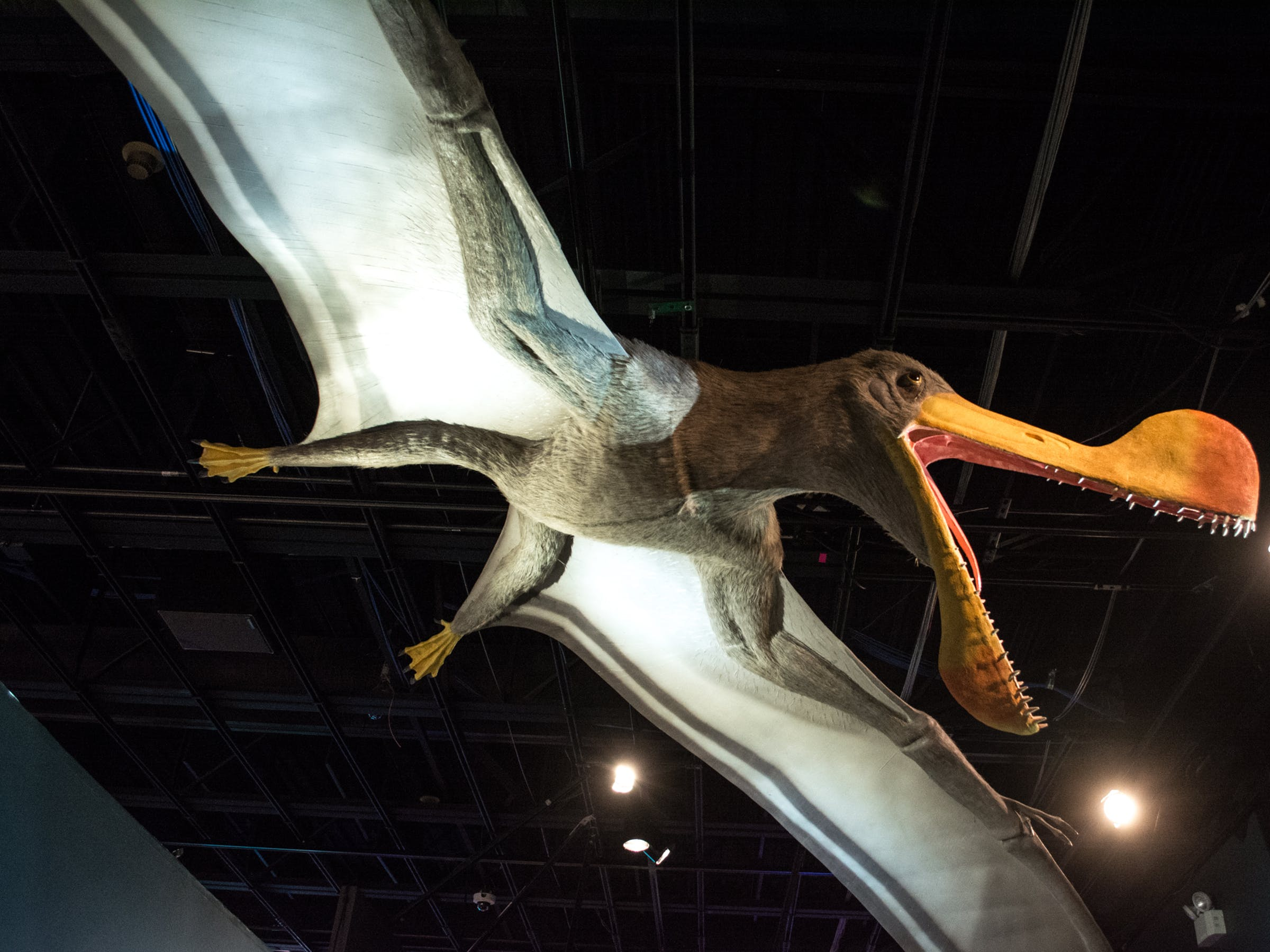 Tropeognathus model 03 - Pterosaurs Flight in the Age of Dinosaurs