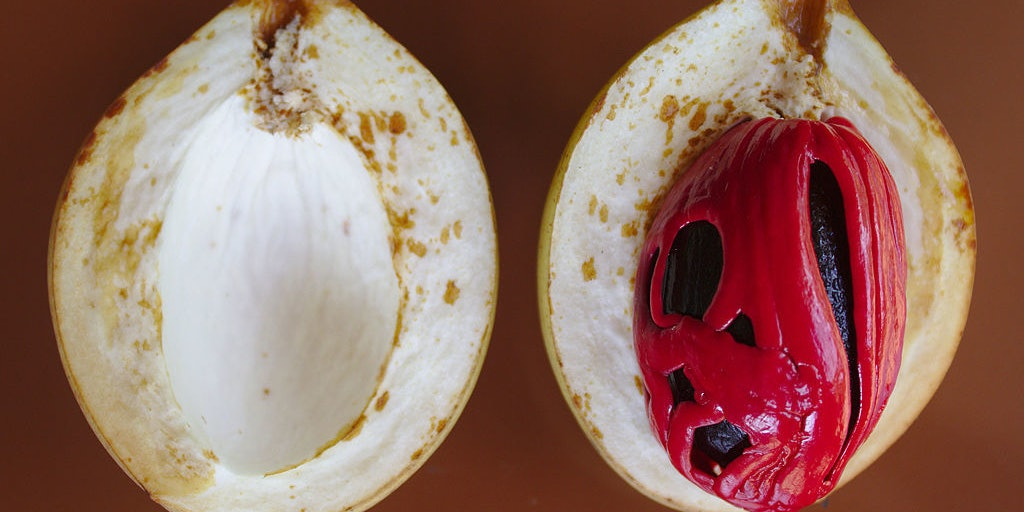 Red nutmeg is encased by a white aril, which gives rise to mace.