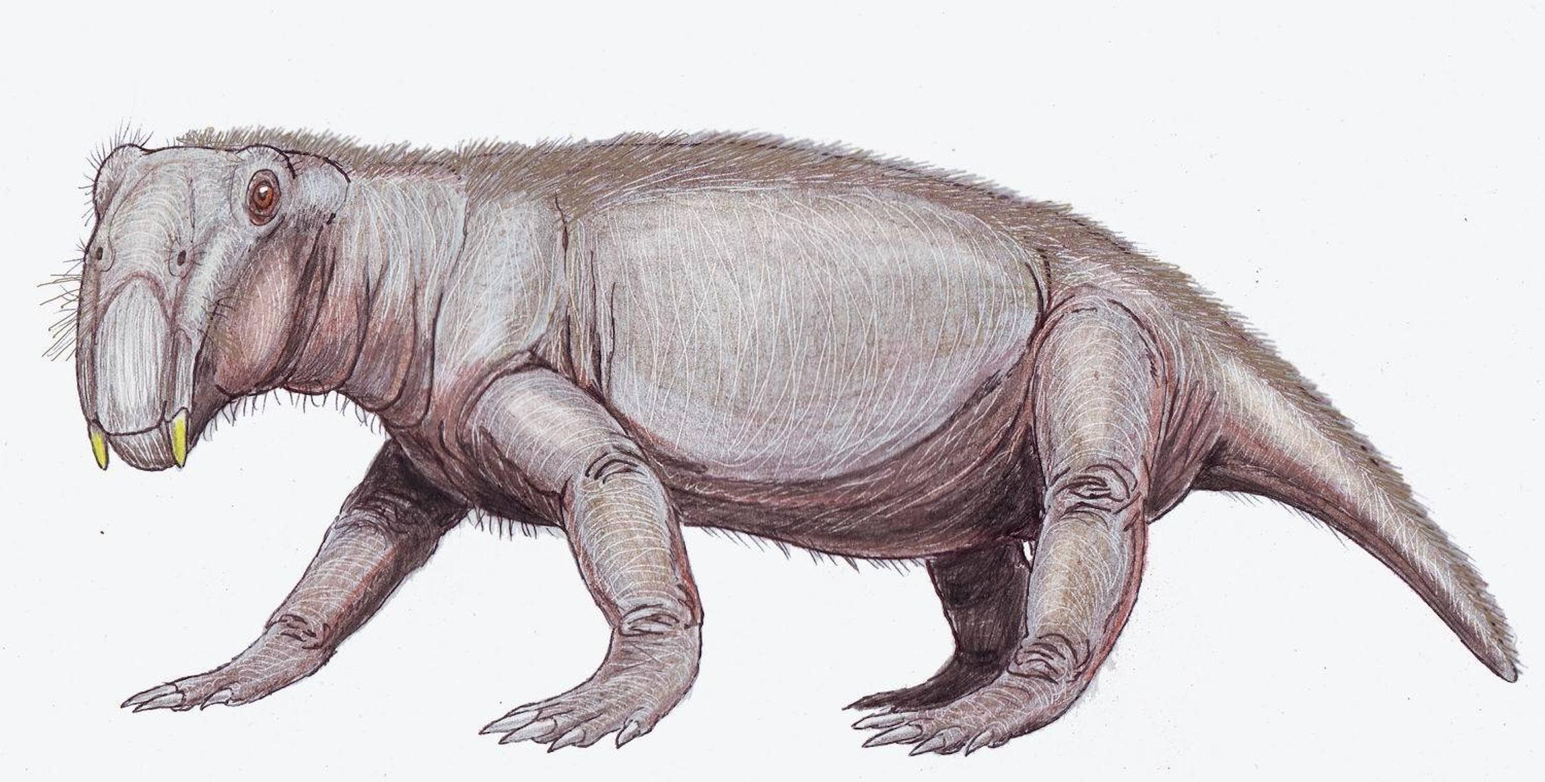 'Lystrosaurus georgi,' a proto-mammal and survivor of the Permian-Triassic extinction.