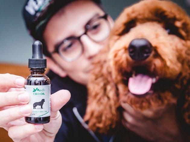 CBD é seguro para seu cão? Muitos donos juram que os resultados são promissores