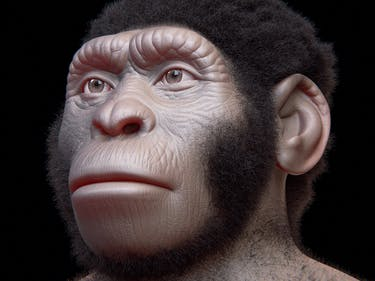 This Ape-Man Lived Alongside Early Humans