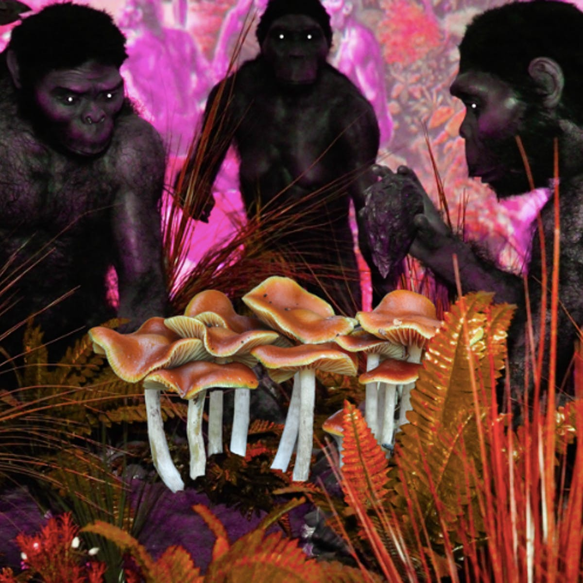 In 'Stoned Ape' Theory, Consciousness Has Roots in Psilocybin | Inverse