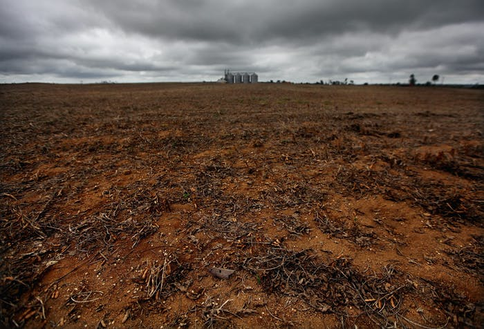 A soybean field is seen on deforested land in 2012 in Para, Brazil.
