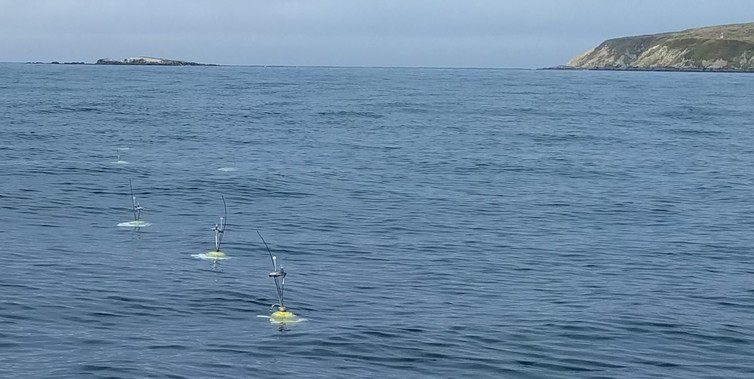 ABLEs deployed in northern Bodega Bay.