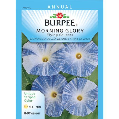 Morning Glory Seeds morning glory seeds from home depot are a good ...