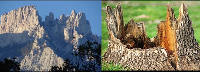 For some Flat Earthers, all mountains are the remnants of ancient giant tree stumps.