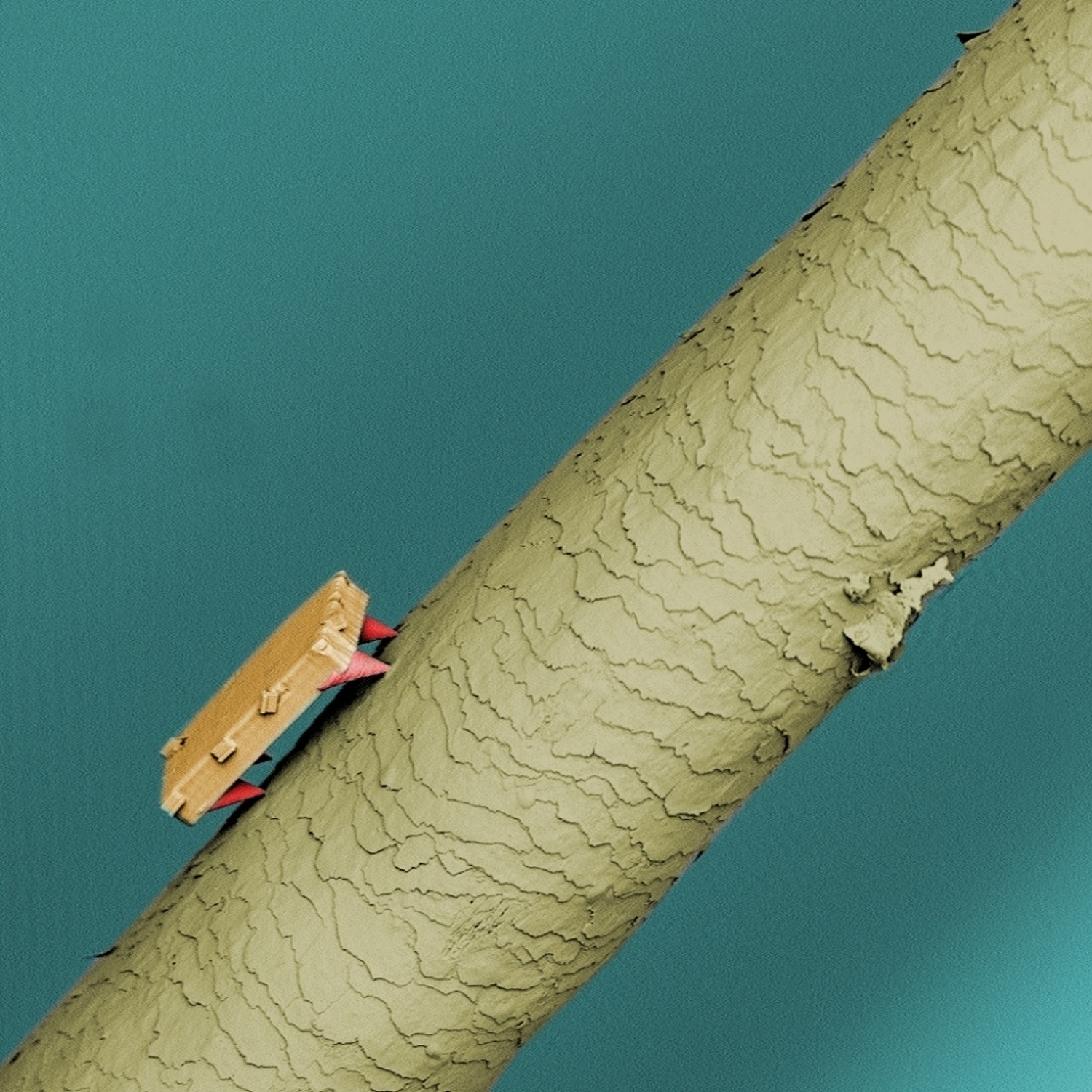 A 60-micron robot sits on a strand of human hair, which on average is 75 microns across.