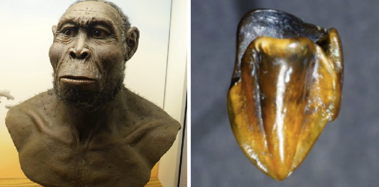 Ancient teeth could rewrite human history.