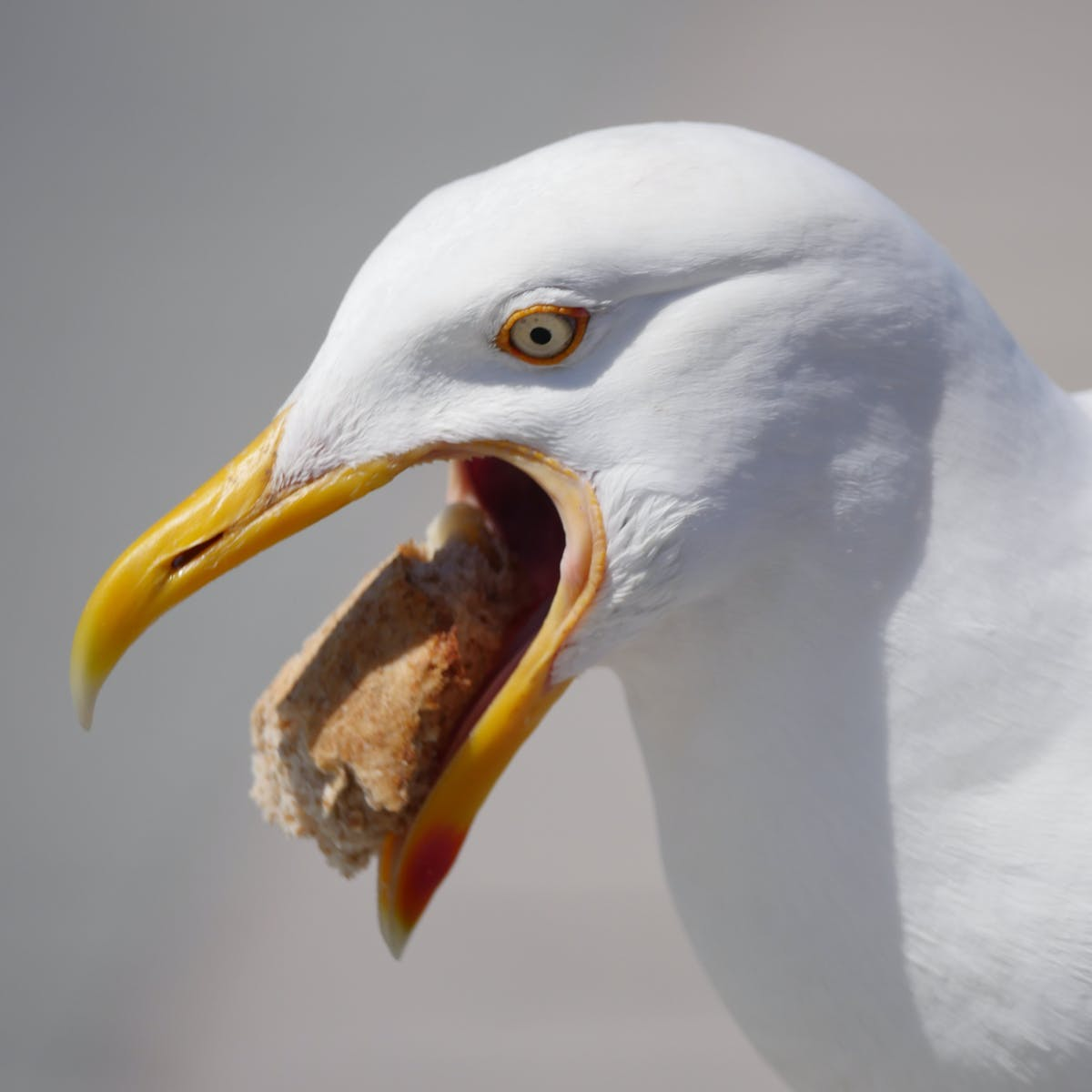 There's a Science-Backed Method for Keeping Seagulls Away From Your Food