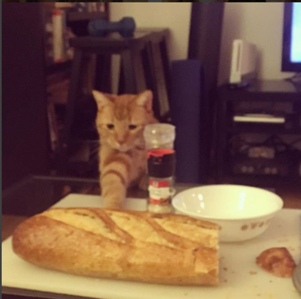 cat knocking over bread