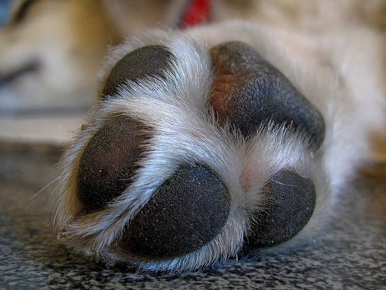 This Is Why You Can't Stop Smelling Your Dog's Feet