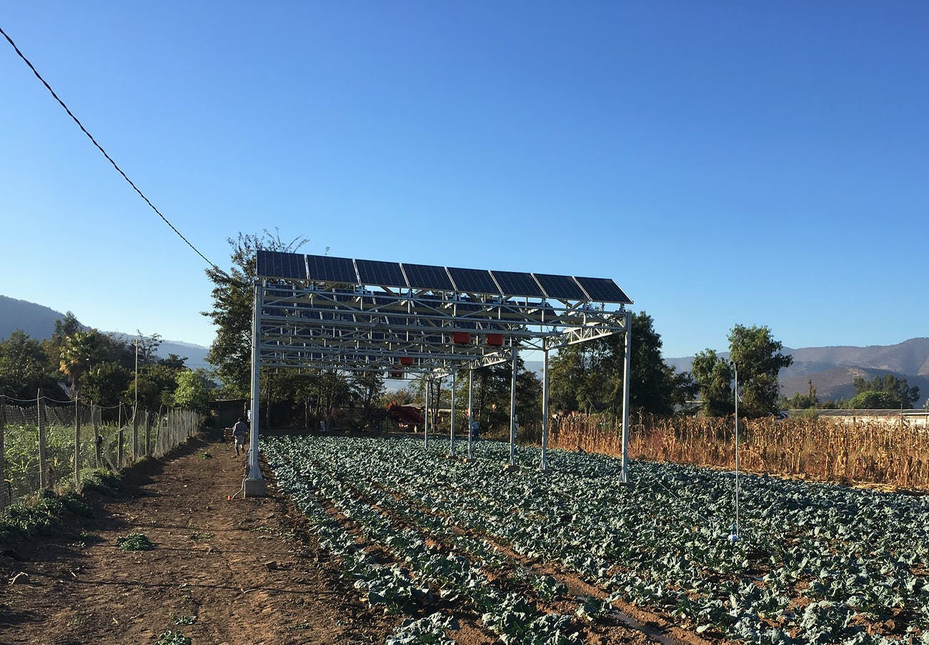 One of the three Chilean agrivoltaic projects. This one, located in Curacavi, is growing herbs.