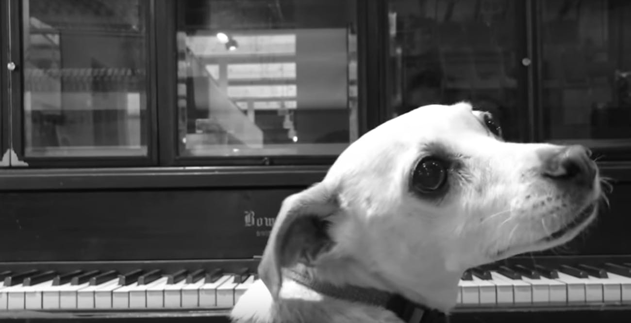 """This dog named Bento appeared in a 'Westworld' Season 2 """"spoiler"""" video that turned into a Rick-roll."""