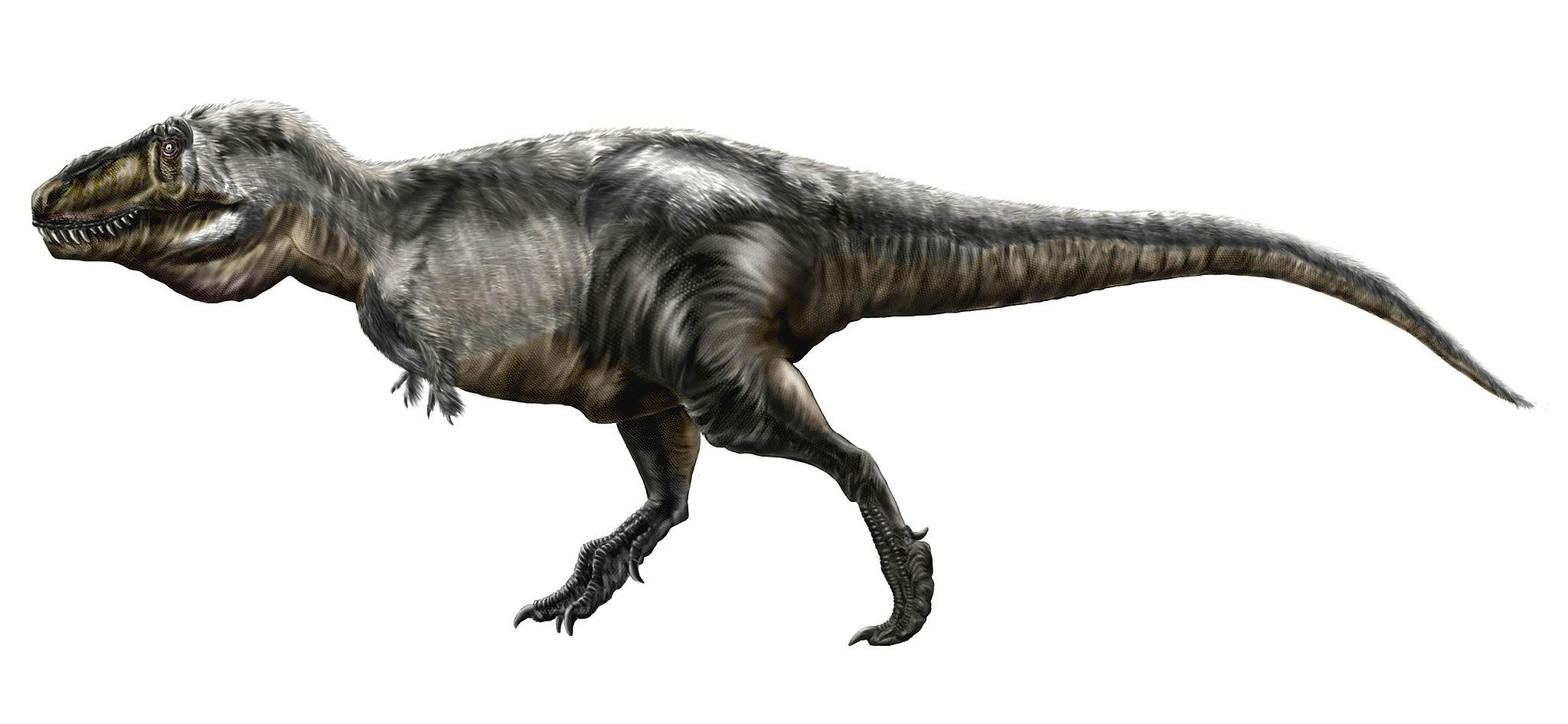 The tyrannosaurus rex had lips and it probably didn 39 t roar for Tyranosaurus rex
