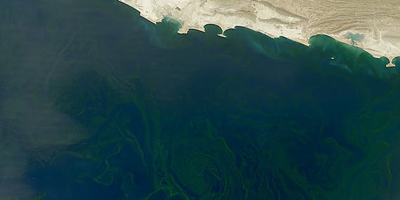 dead zone arabian sea