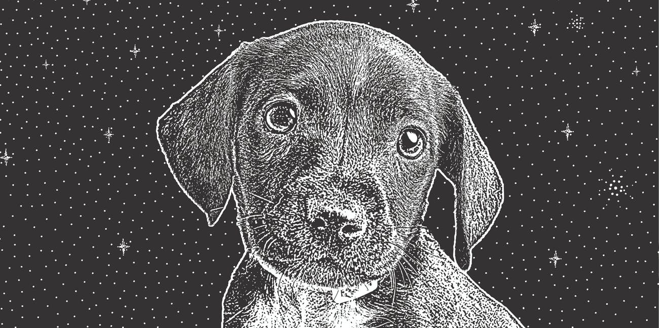 puppy dog eyes