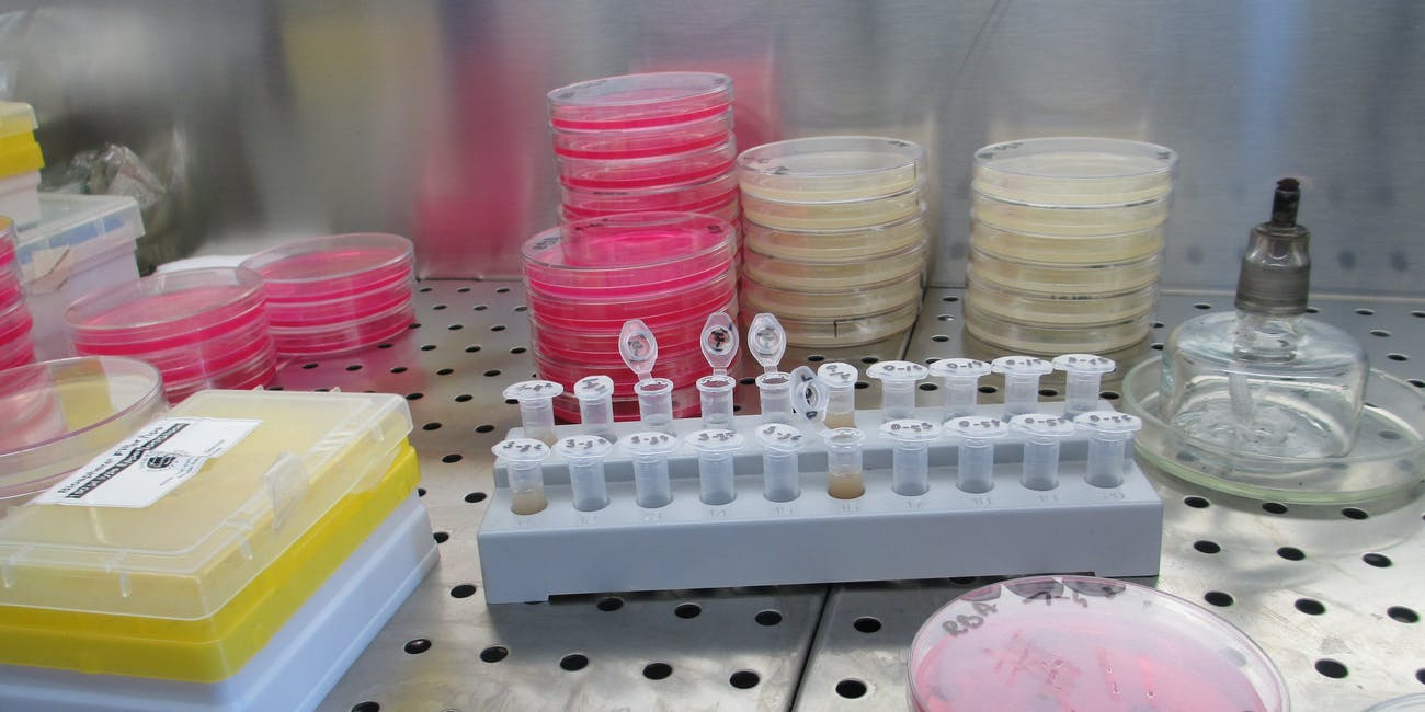 Lab petri dishes and vials.