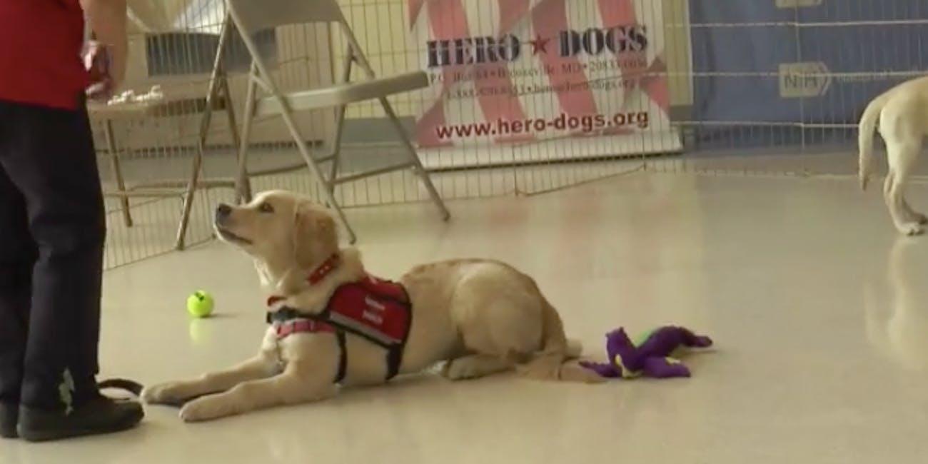 pup training