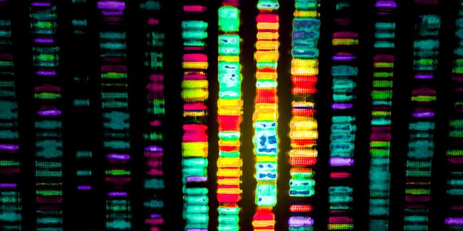 Human Genome Project Nature Article
