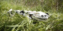 New Robot Salamander Features Detailed, Working Vertebrae