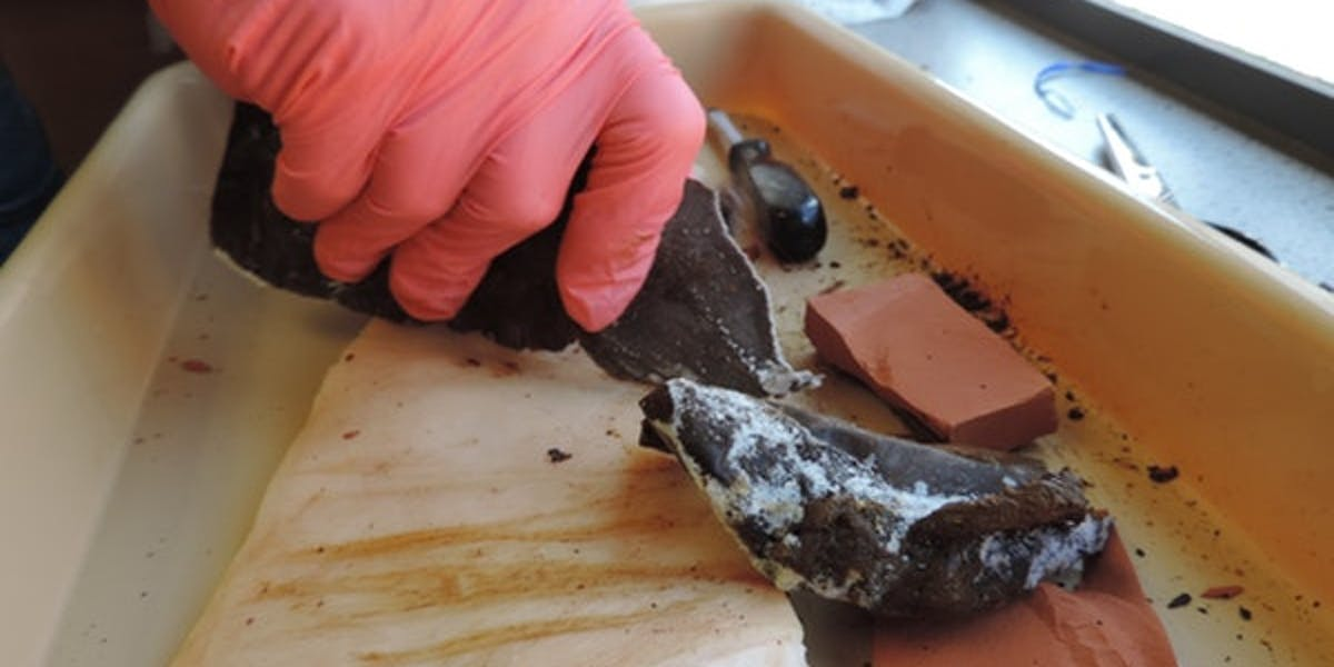 frozen poop knives