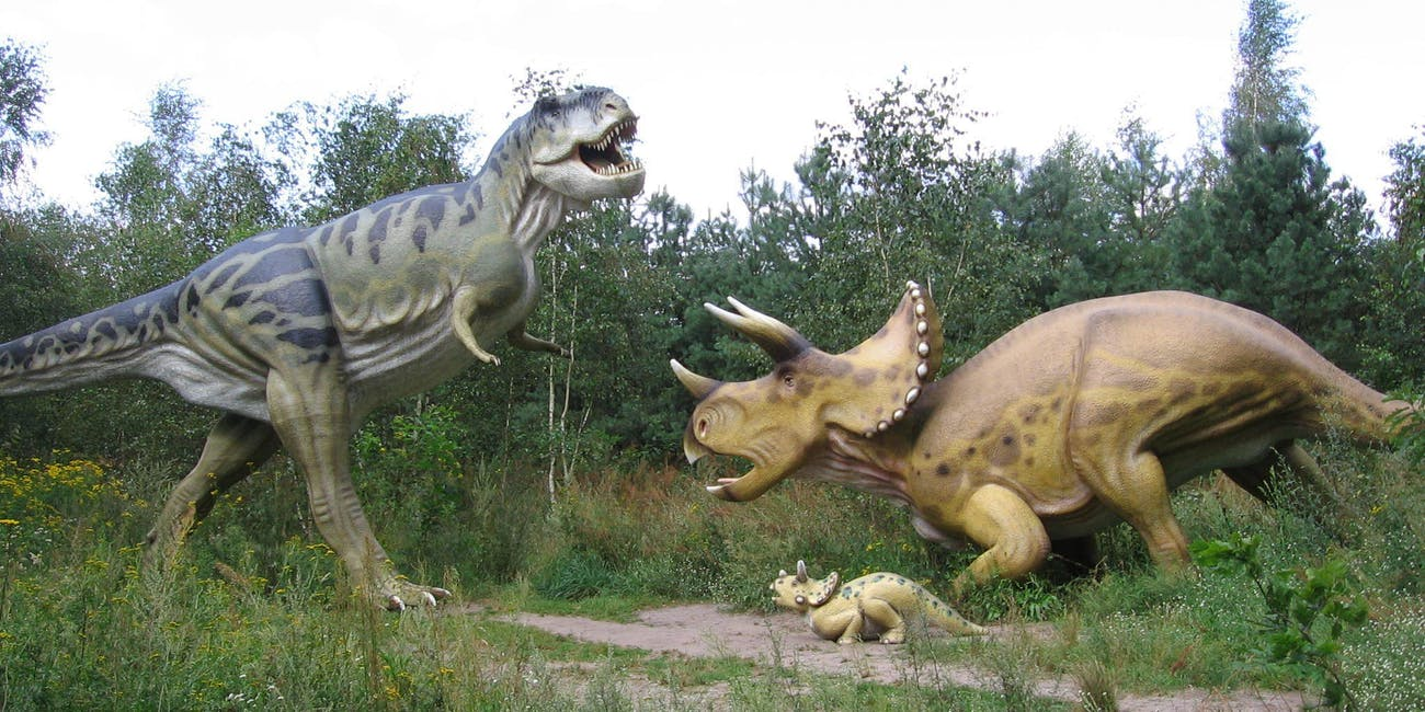 triceratops t rex fight