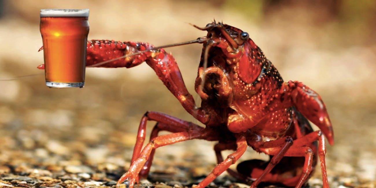 Crayfish got drunk faster when they were being social animals.