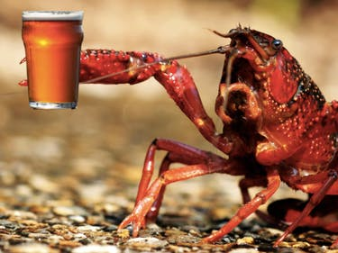 Party Animals Get Drunk Faster, Hammered Crayfish Suggest