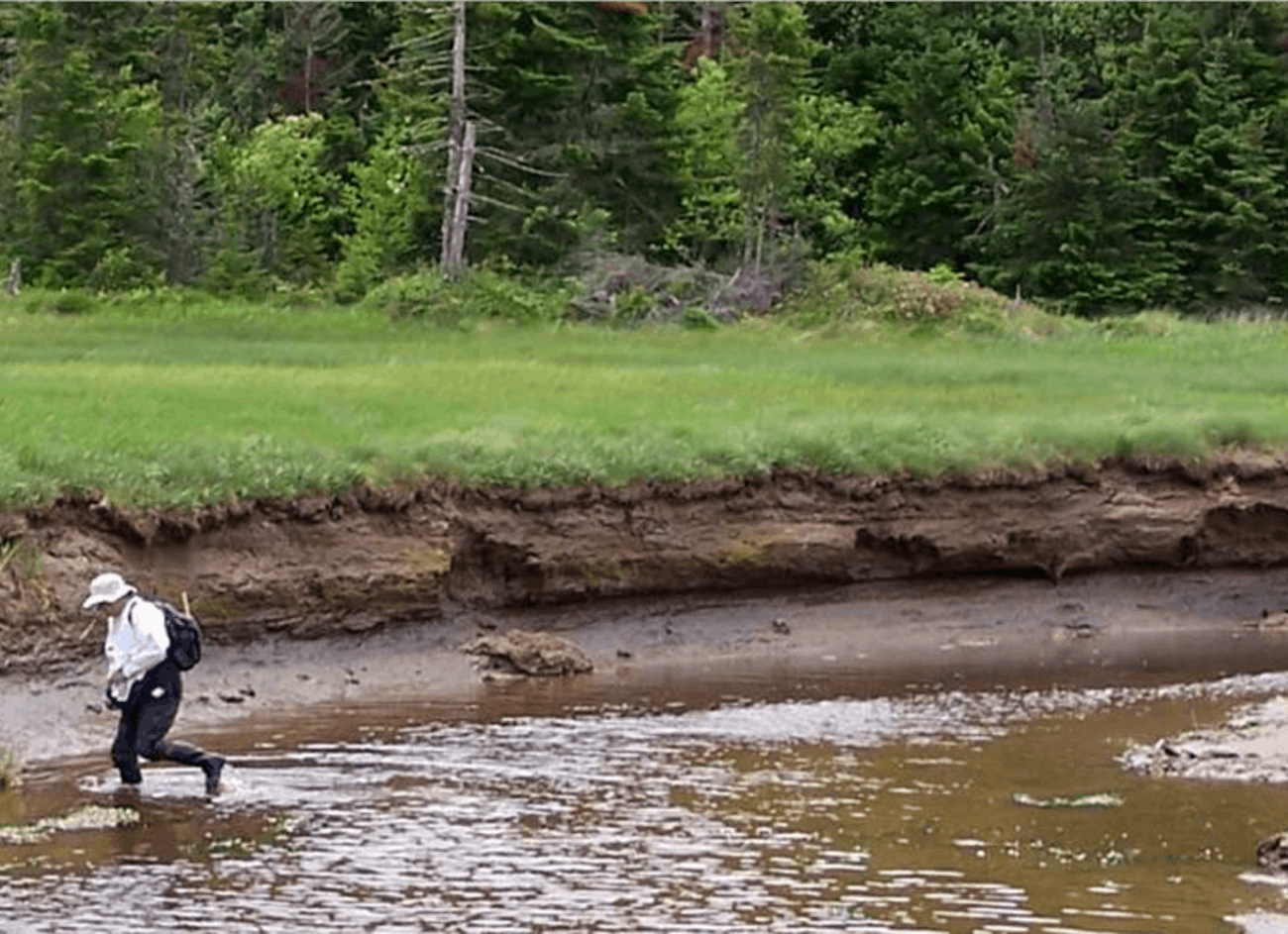 Ten feet (3 meters) of carbon-rich soil accumulation along Dipper Harbour, Bay of Fundy, New Brunswick, Canada, has been radiocarbon dated to have accumulated over 3,000 years.