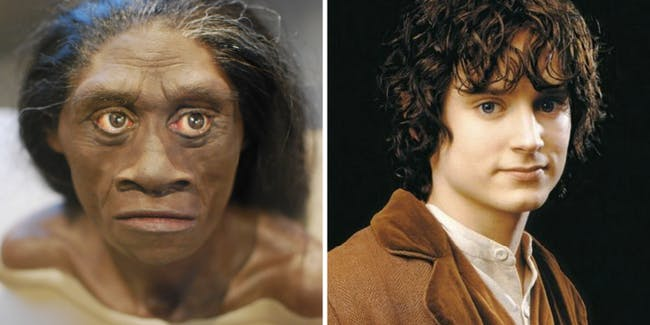 Free online courses are available to learn about the homo floresiensis.