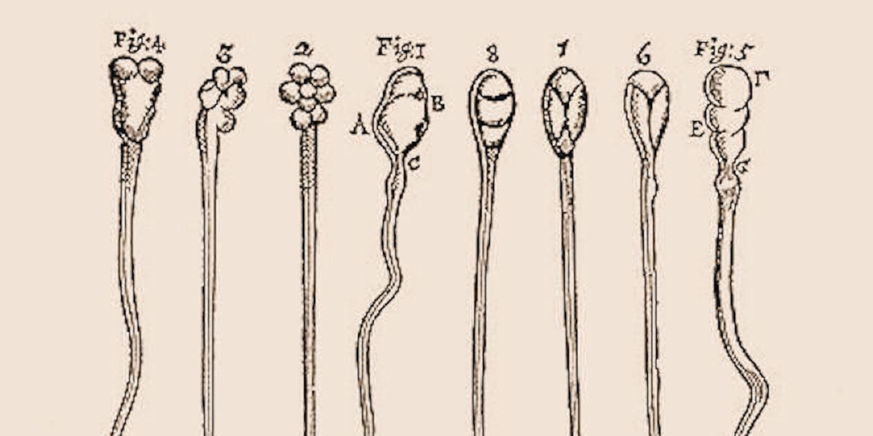 sperm RNA