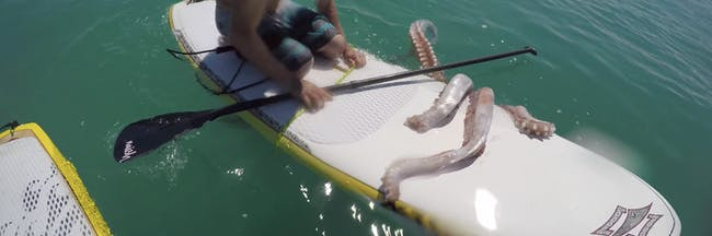 giant squid south africa paddleboard
