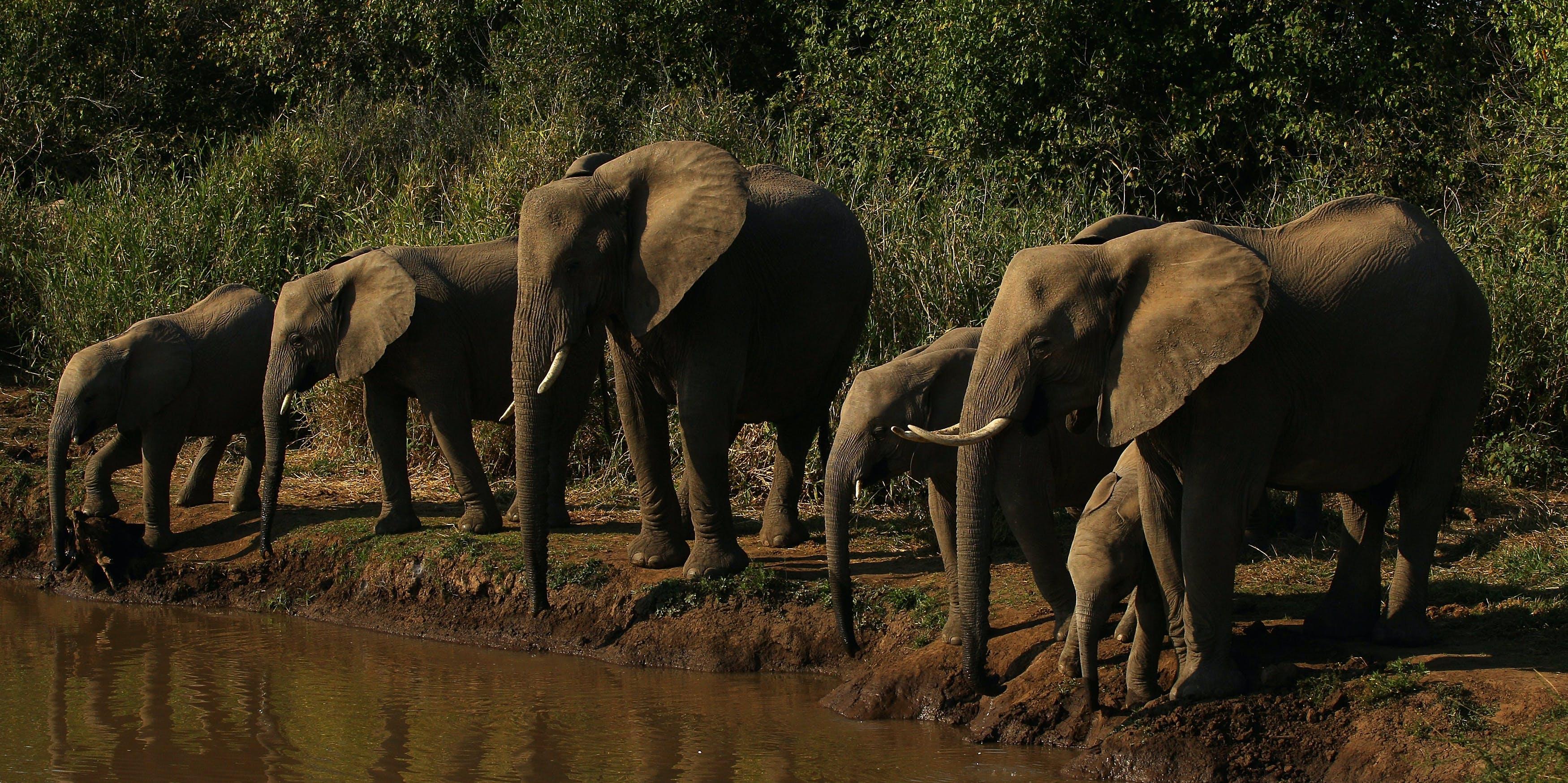 Elephants sleep the least of any mammal we know of.