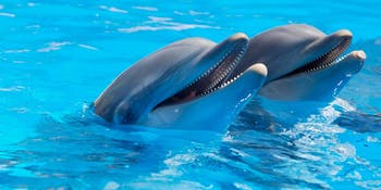 New evidence is published of thirsty dolphins.
