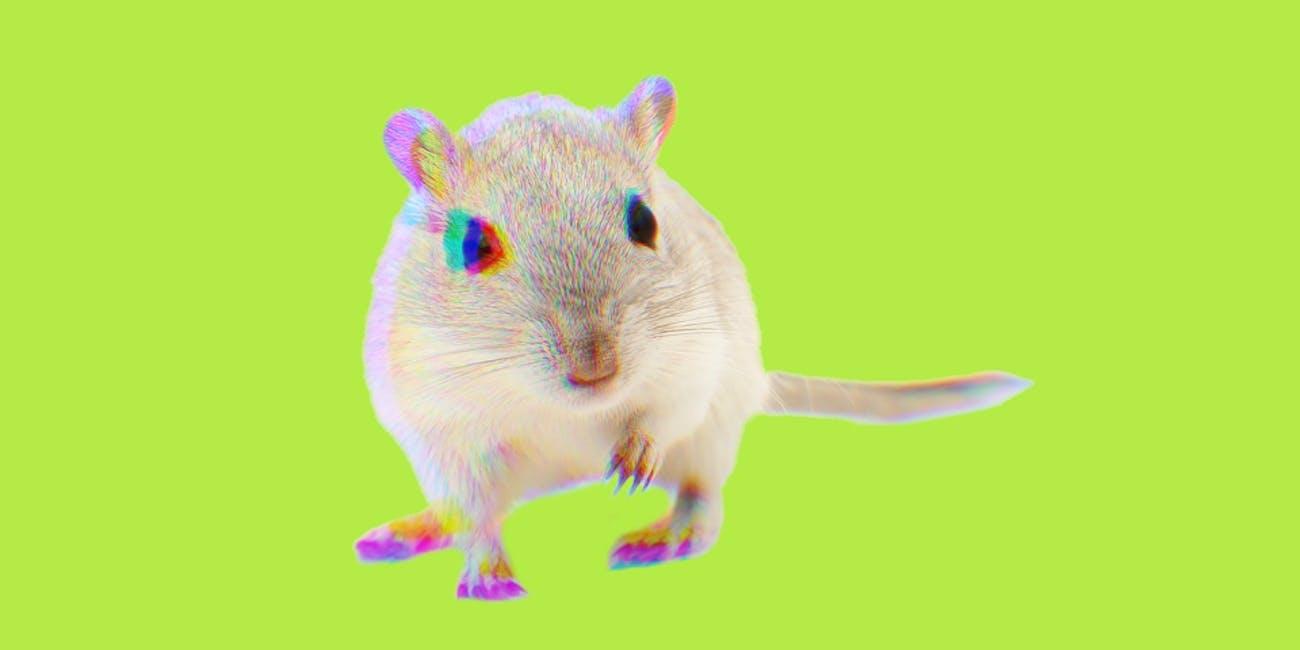 mouse lab