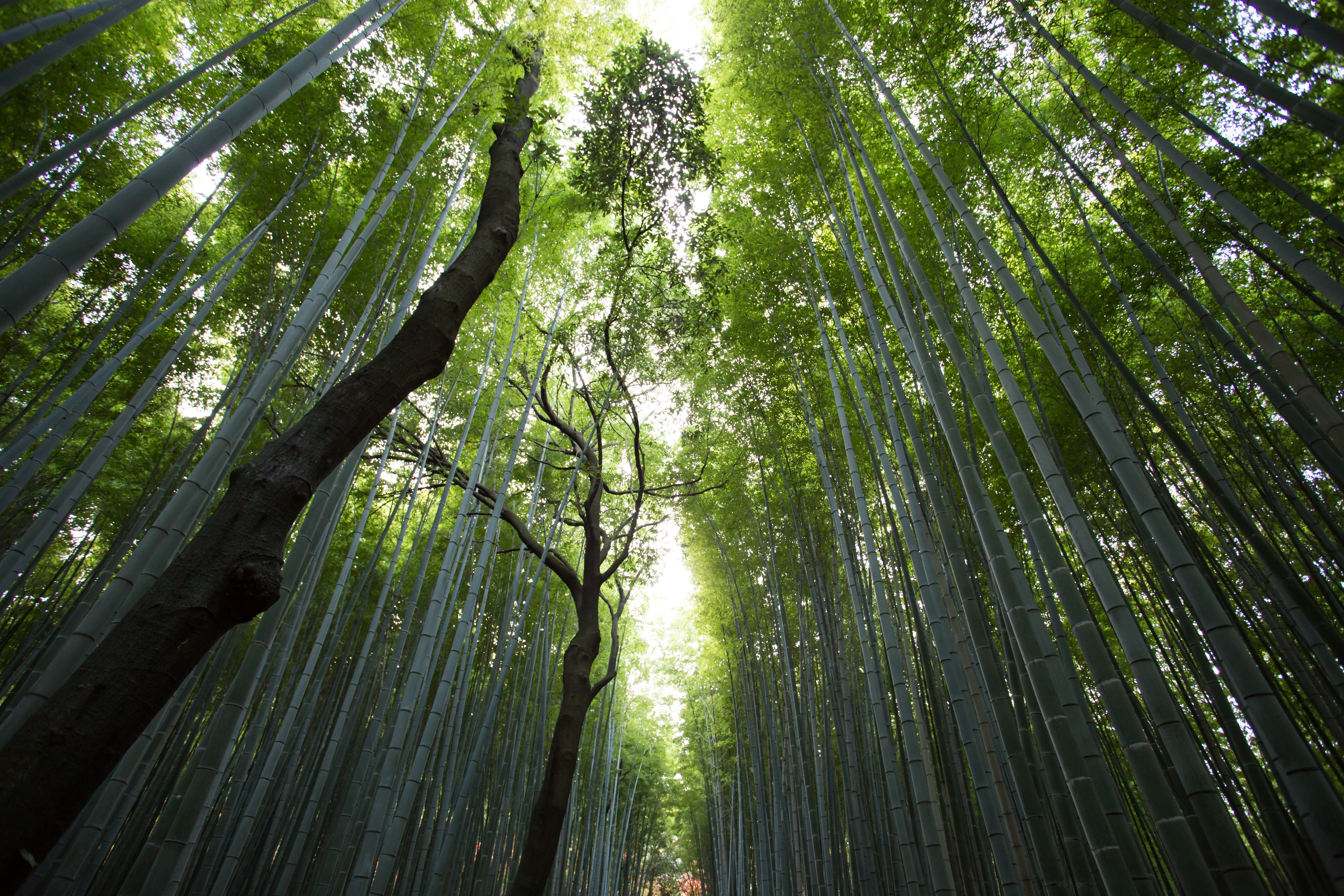 Genetically Modified Trees Could Save Us From Global Warming | Inverse