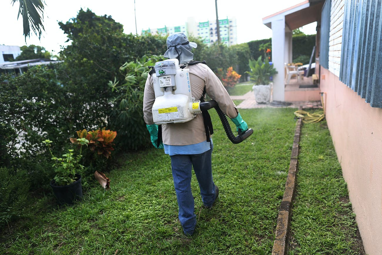 MIAMI, FL - OCTOBER 14: Joseph Blackman, a Miami-Dade County mosquito control inspector, uses a sprayer filled with a pesticide in an attempt to kill mosquitos that are carrying the Zika virus on October 14, 2016 in Miami, Florida. Florida Governor Rick Scott's office announced yesterday that a new active transmission zone has been found in a one-square-mile area from NW 63rd Street to NW 79th Street and from North Miami Avenue to NW 10th Avenue. With the announcement, the South Florida area now has their third area where the virus has been found. (Photo by Joe Raedle/Getty Images)